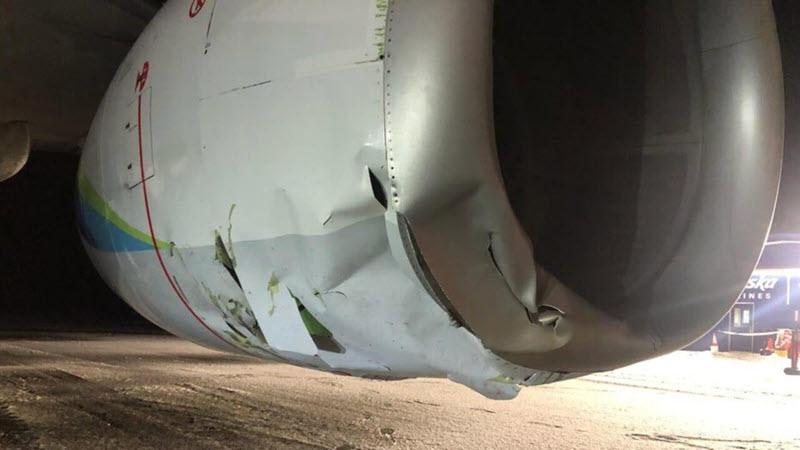 Passagierflugzeug rammt Braunbär
